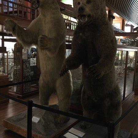 Fairbanks Museum and Planetarium Photo