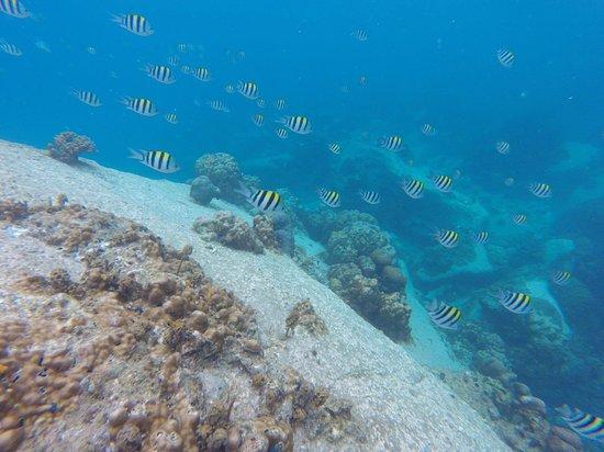 DJL Diving: Snorkelling