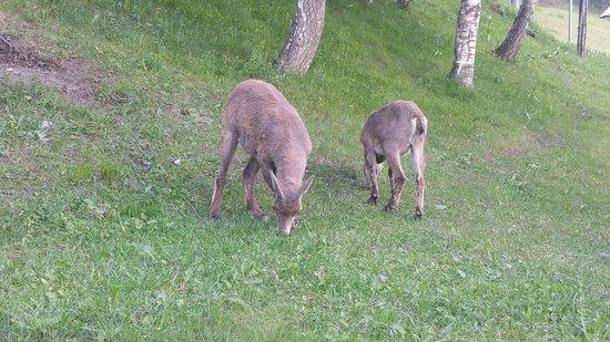Parc Animalier d'Introd: Animali