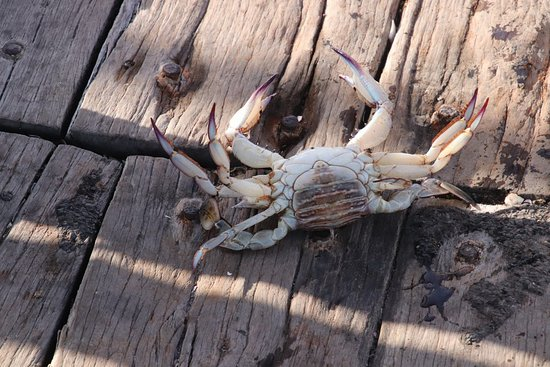 Henley Square: A crab
