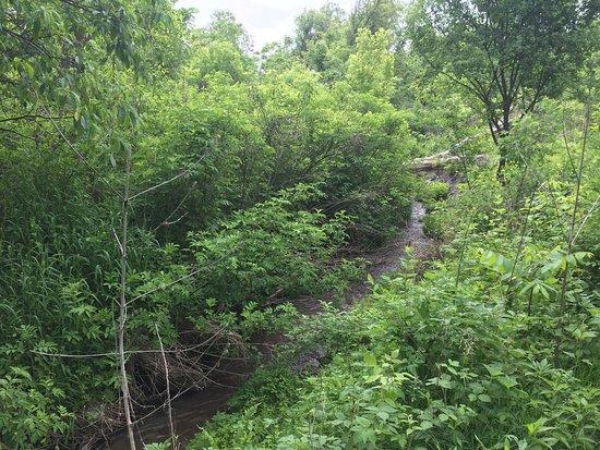 Springdale Inn: stream