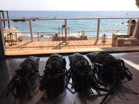 Splendor del Mar Beachbar & Restaurant: From the sea straight to the table