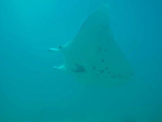 Maupiti Diving: IMG-20180606-WA0001_large.jpg