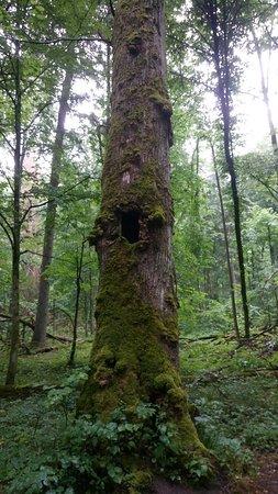 Ảnh về Bialowieza Forest