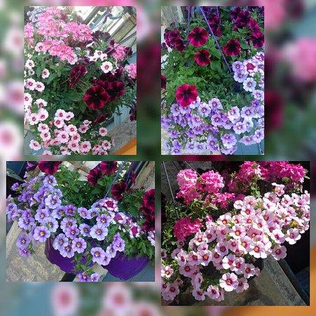 Villersexel, Frankrike: nos fleurs