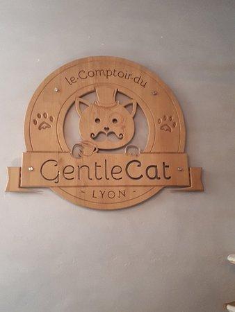 Le GentleCat Photo