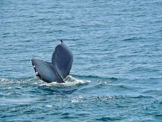 New England Aquarium Whale Watch照片