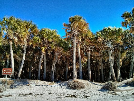 Egmont Key State Park: One of the Palm Forests along the beach