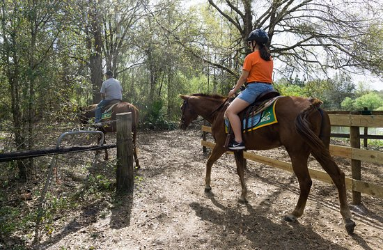 อาร์เคเดีย, ฟลอริด้า: Horsing Around Ranch in Lakes Suzy, near Arcadia, Fla., offers leisurely trail rides