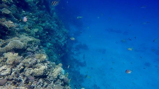 Hurghada Adventure: Snorkelen bij een koraalrif