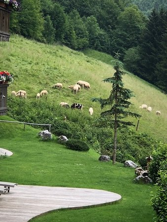 Hotel Blaue Gams : Sheep on the Hillside