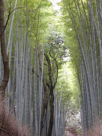 Kyoto Daily Tours照片