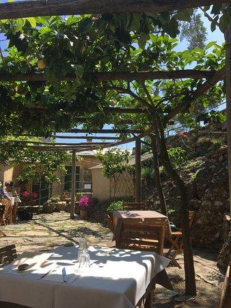 Da laura: Schattiger Platz unter Zitronenbäumen