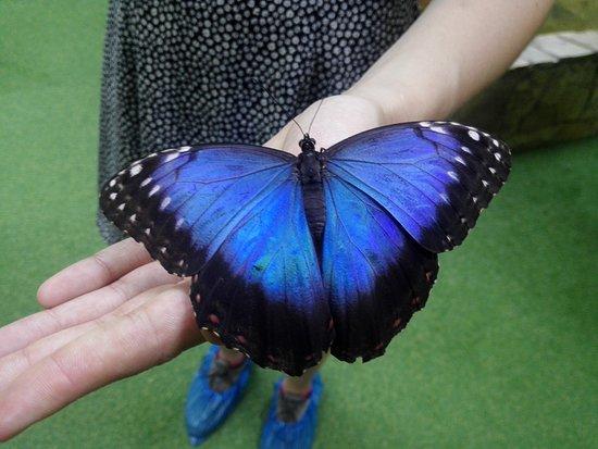 Butterfly House Varna : Eating butterflies