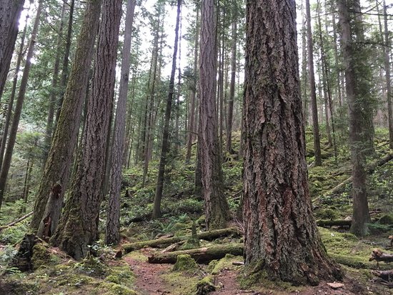 Sechelt Heritage Hidden Groves : You can see the forests's story
