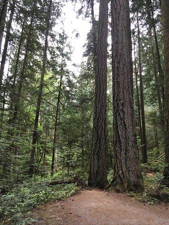 Sechelt Heritage Hidden Groves : Inviting trail