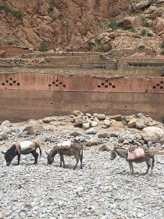 Morocco 1001 Tours照片