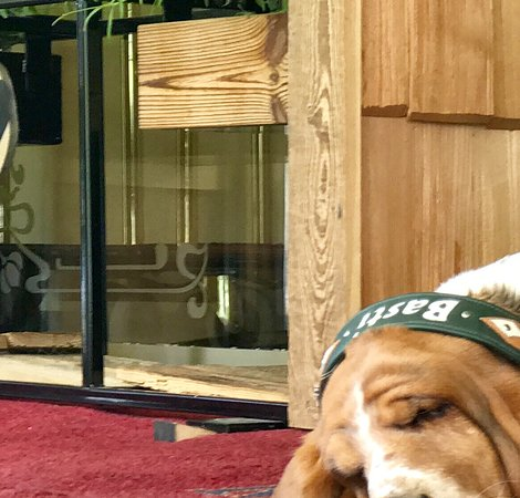 Ried im Zillertal, Austria: Basti, Haushund