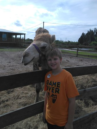 Obloy Family Ranch: We had never pet or fed a camel before