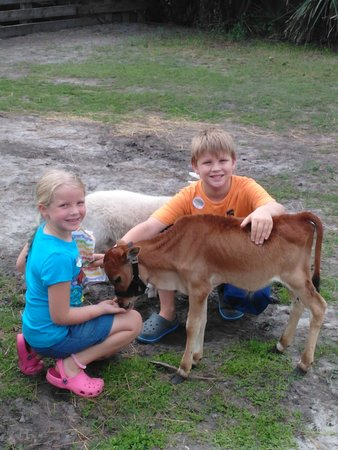 Obloy Family Ranch: A 10 week old calf followed the kids around. It was so sweet.