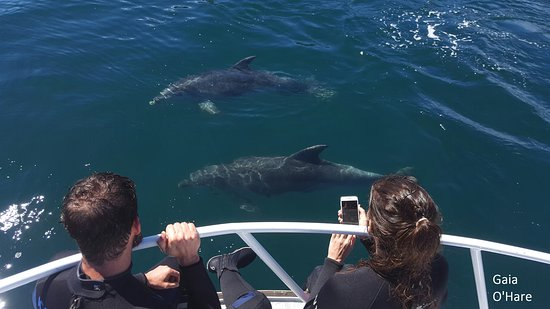 E-Ko Tours: Viewing dolphins under your feet