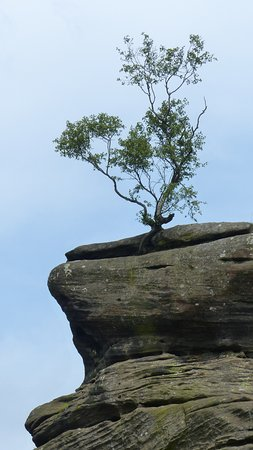 Brimham Rocks: Rock