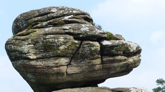 Brimham Rocks: Tree on Rock