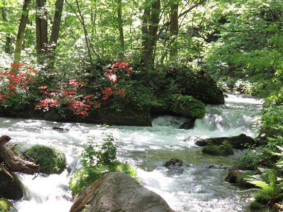 Oirase Mountain Stream: 石ケ戸から雲井の滝まで歩いて