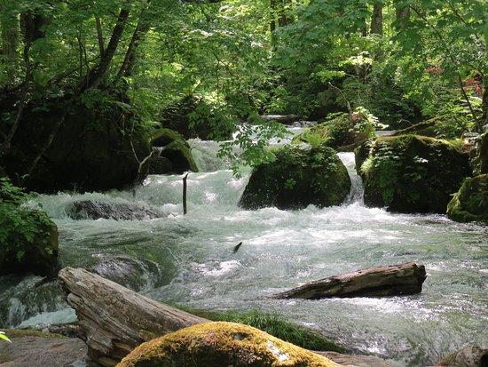 Oirase Mountain Stream: 石ケ戸から雲井の滝まで歩いて(2)
