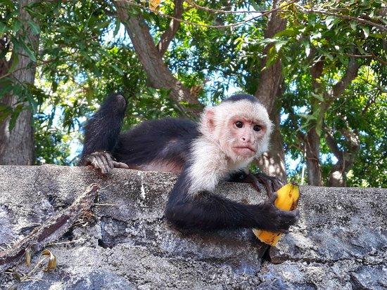Trek Nicaragua Volcano Expeditions: Islets of Granada *The Monkey Island*