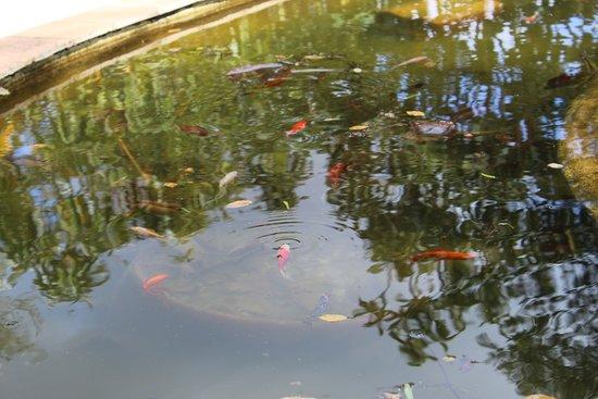 Quinta do Cano: lago de peixes e carpas
