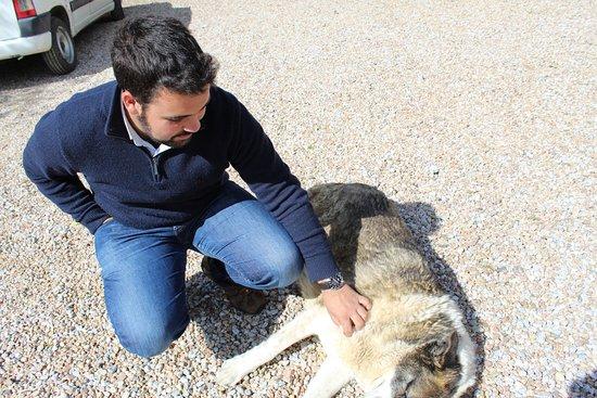 Quinta do Cano: um dos cãezinhos do alojamento