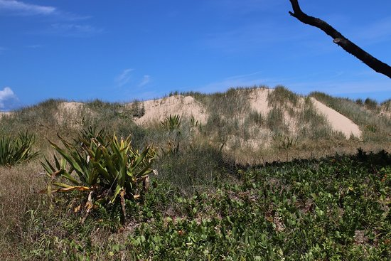 Kawana Beach: More about the dunes