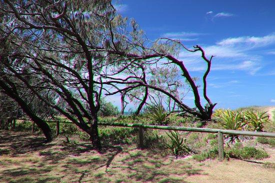 Kawana Beach: Last view