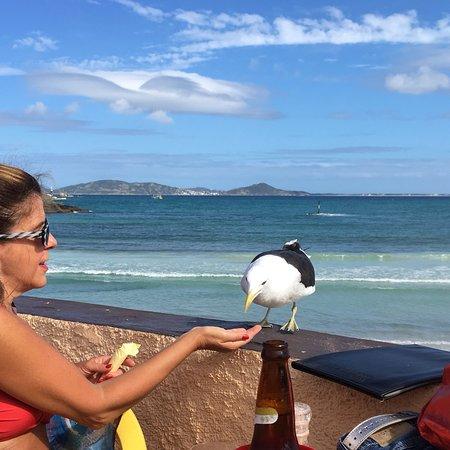 Praia do Forte ภาพถ่าย