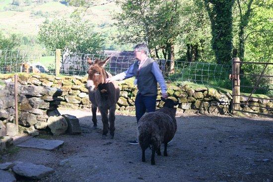 Molly Gallivan's Cottage & Traditional Farm: Owner feeding animals.