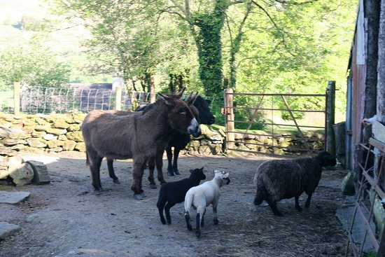 Molly Gallivan's Cottage & Traditional Farm: The Group!