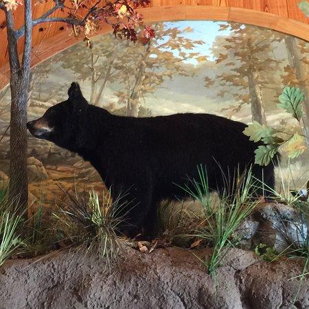 写真Dogwood Canyon Nature Park枚