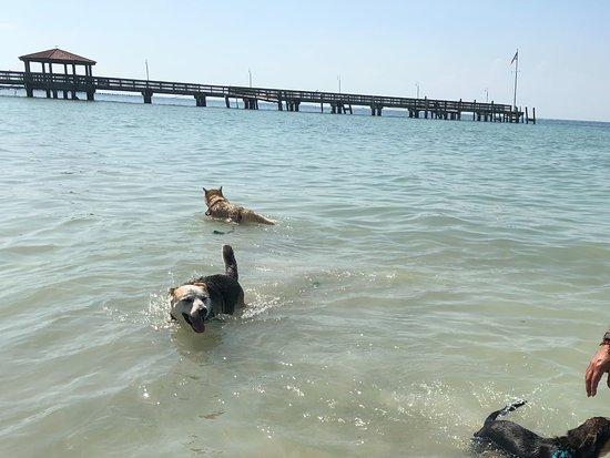 Dog Beach : Dogs