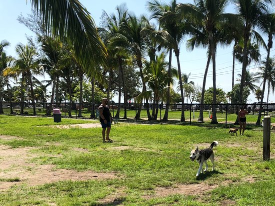 Higgs Beach Dog Park