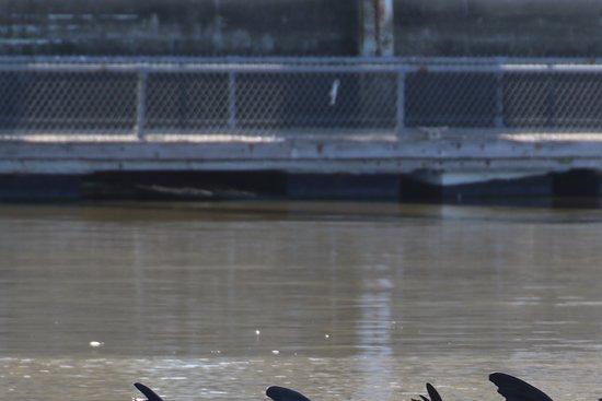 Sanctuary Cruises: Sea lions waving us off