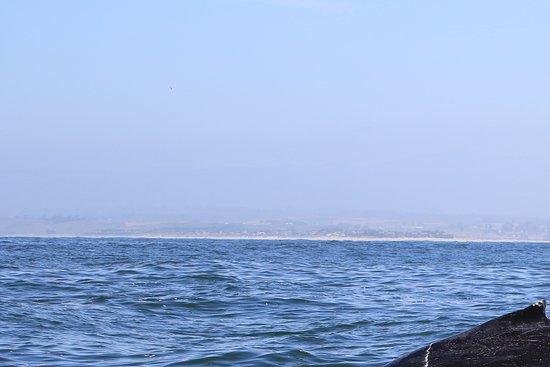 Sanctuary Cruises: Humpbacks