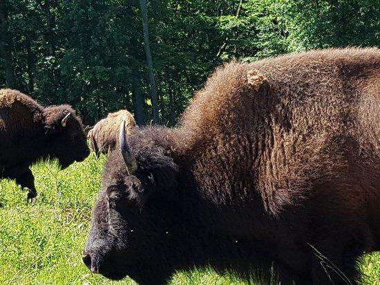 写真The Elk and Bison Prairie枚