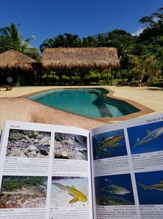Waidroka Bay Resort-bild