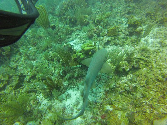 Belize Underwater Photo