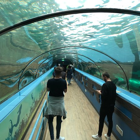 Sea Life Sydney Photo