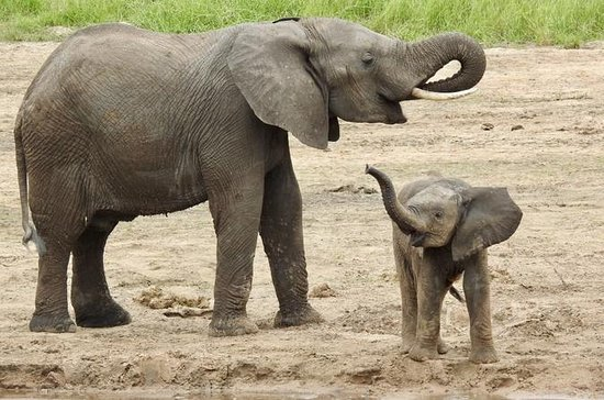 Full - Day Safari to Arusha National...