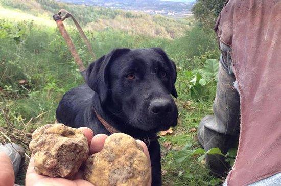 Siena truffel-jachtervaring: Siena Truffle-Hunting Experience