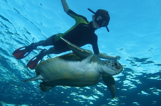 Snorkeling Tour with Sea Turtles and