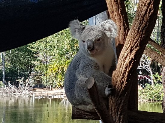Billabong Sanctuary: How Cute are these Koala bears!